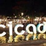 cicada-market.jpg