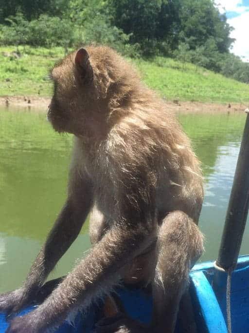טיול יום פרטי לאי הקופים בשמורת קנג קראג'אן