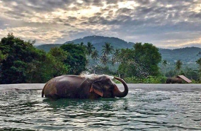 חוות טיפול פילים בקוסמוי