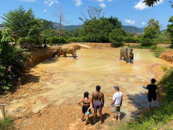 חוות טיפול פילים בפוקט